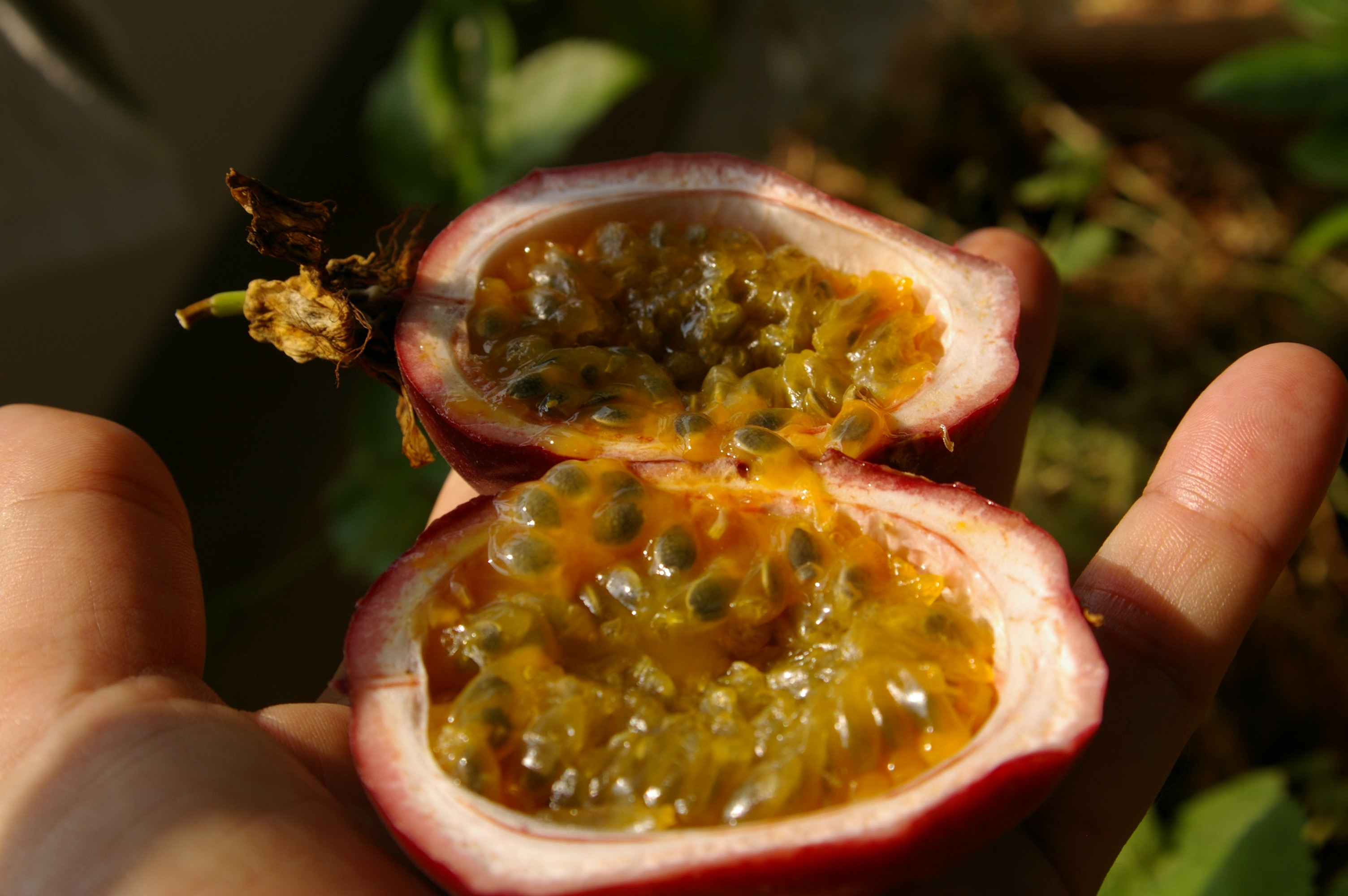 I forgot to mention that my other hobby is gardening. This is a passion fruit that I grew on my veranda.